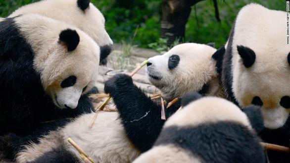 Lo cứu gấu trúc, Trung Quốc bỏ lơ loài khác - Ảnh 1.