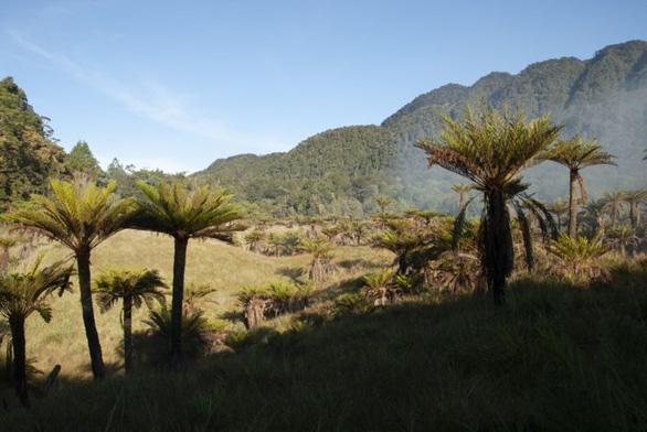 Hòn đảo nhiều loại cây cỏ nhất Trái đất - Ảnh 4.