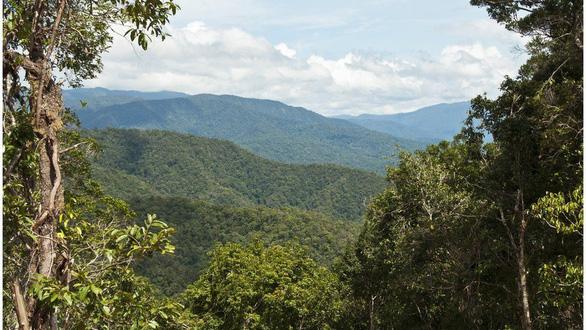 Hòn đảo nhiều loại cây cỏ nhất Trái đất - Ảnh 3.