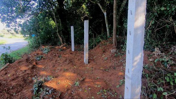 Công ty du lịch bị phạt gần 200 triệu đồng vì phá rừng - Ảnh 1.