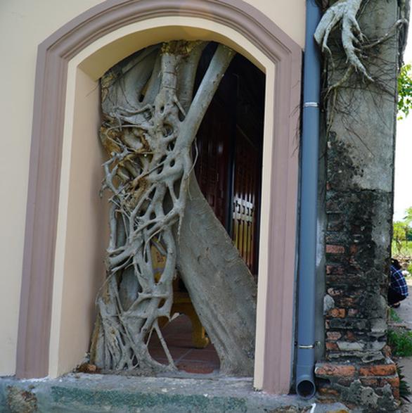 Trùng tu ngôi đình hơn 100 tuổi, giữ nguyên hai cây bồ đề độc đáo trên nóc - Ảnh 5.