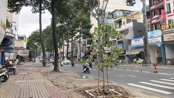 Cây xanh trên nhiều đường TP.HCM biến mất: Có hay không lạm dụng đốn cây? - Ảnh 1.
