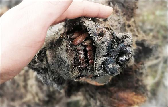 Phát hiện xác gấu hang động còn nguyên vẹn sau 39.000 năm - Ảnh 1.
