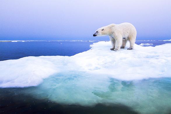 Khí hậu Bắc Cực đổi mới - Ảnh 1.