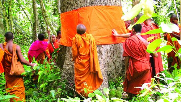 Quy y cho cây - hướng tâm trân trọng môi trường - Ảnh 1.