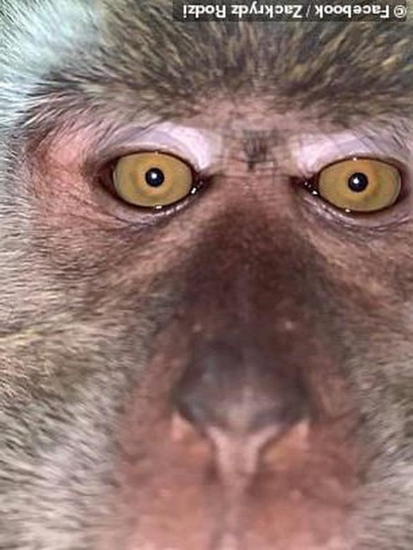 Tìm lại được điện thoại bị mất thì thấy toàn hình tự sướng của... khỉ - Ảnh 1.