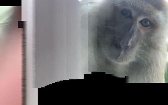 Tìm lại được điện thoại bị mất thì thấy toàn hình tự sướng của... khỉ - Ảnh 3.