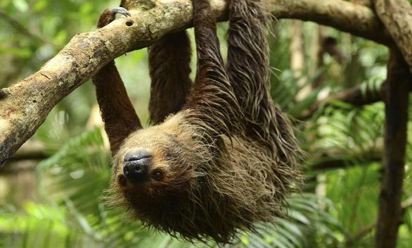 Loài vật sinh tồn nhờ... sống chậm - Ảnh 3.