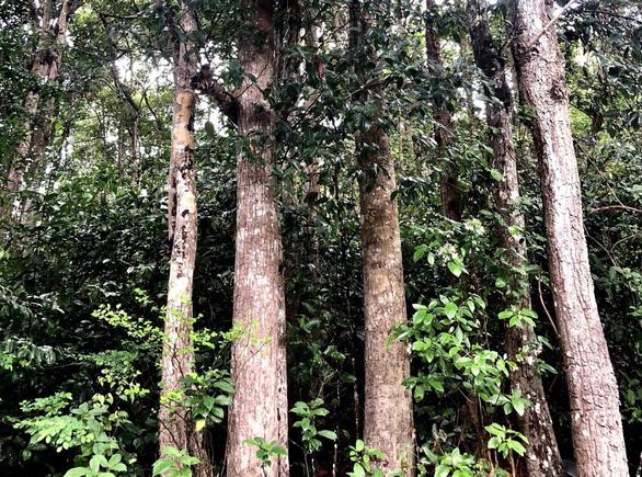 Điều chỉnh dự án hạ tầng tái định cư, giữ rừng dầu đặc hữu Côn Đảo - Ảnh 2.