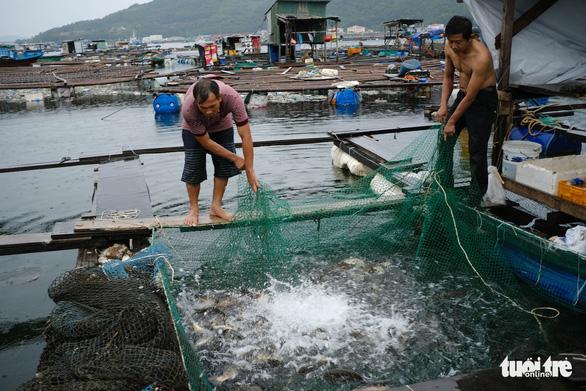Vận động người nuôi cá lồng bè lên bờ tránh bão - Ảnh 1.