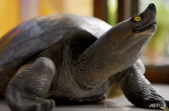Đại sứ Úc tại Campuchia xin lỗi vì ăn món ăn có rùa quý hiếm - Ảnh 1.