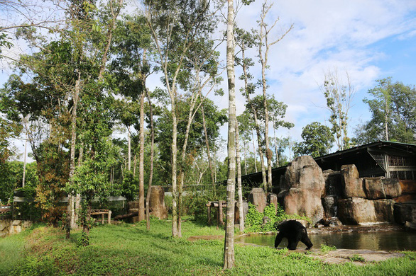 Vinpearl Safari hồi sinh cho gấu ngựa - Ảnh 2.