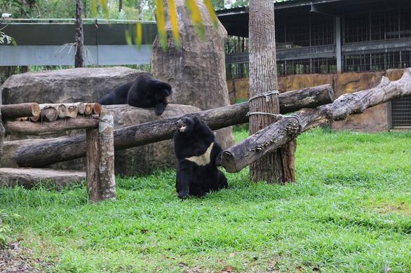 Vinpearl Safari hồi sinh cho gấu ngựa - Ảnh 4.