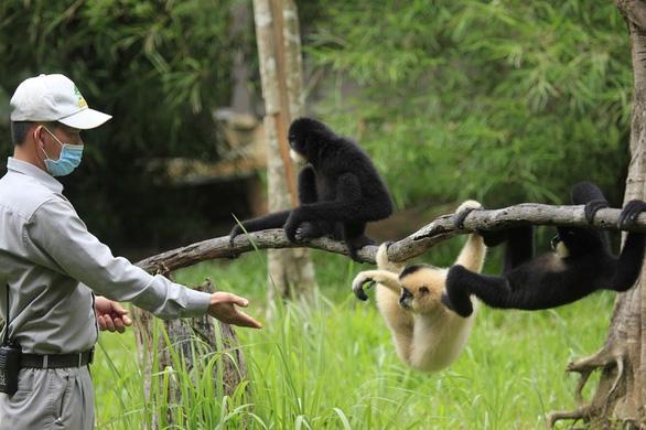 Vinpearl Safari hồi sinh cho gấu ngựa - Ảnh 6.