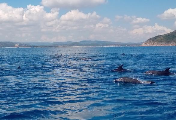 Đàn cá heo trên 200 con 'nhảy múa' ở biển Phú Yên - Ảnh 4.