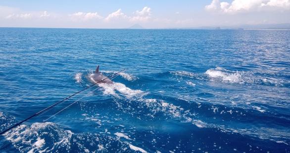 Đàn cá heo trên 200 con 'nhảy múa' ở biển Phú Yên - Ảnh 3.