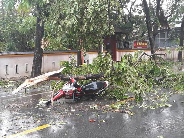 Một chuyên viên Phòng GD-ĐT Huế tử vong do cây ngã đè trong bão số 5 - Ảnh 1.