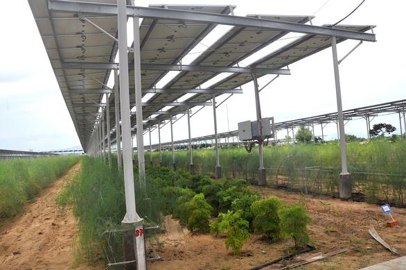 Điện mặt trời kết hợp nông nghiệp vẫn mòn mỏi chờ cơ chế - Ảnh 1.