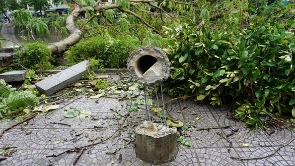 EVNCPC: Nhiều cột điện ở Huế gãy đổ trong bão do cây ngã đè - Ảnh 1.