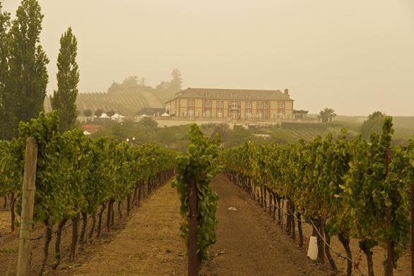 Cháy rừng lịch sử làm đổi hương vị nho California - Ảnh 2.