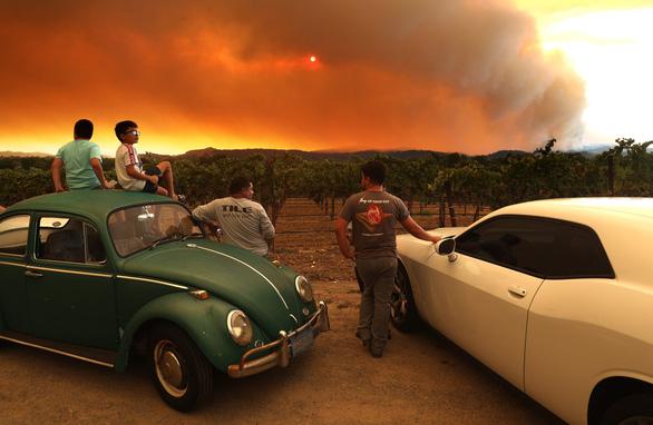 Cháy rừng lịch sử làm đổi hương vị nho California - Ảnh 1.