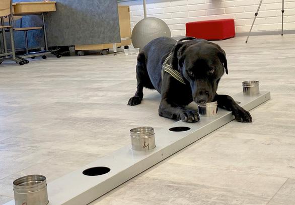 Sân bay ở Phần Lan: dùng chó đánh hơi phát hiện người mắc COVID-19 - Ảnh 2.