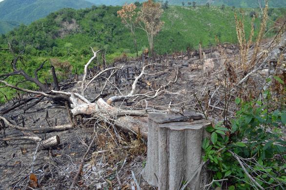 Cả dàn lãnh đạo xã bị kiểm tra dấu hiệu vi phạm trong vụ phá rừng lớn - Ảnh 2.