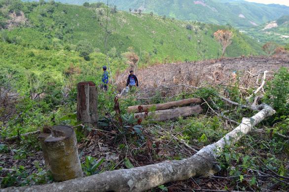 Cả dàn lãnh đạo xã bị kiểm tra dấu hiệu vi phạm trong vụ phá rừng lớn - Ảnh 1.