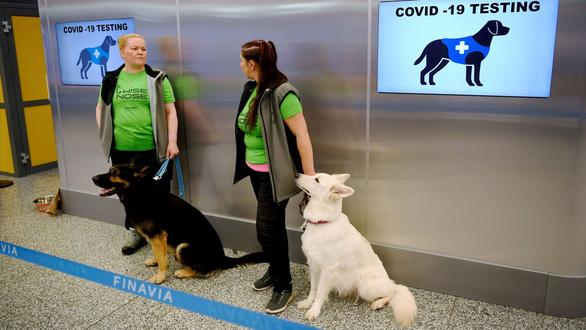 Sân bay ở Phần Lan: dùng chó đánh hơi phát hiện người mắc COVID-19 - Ảnh 1.