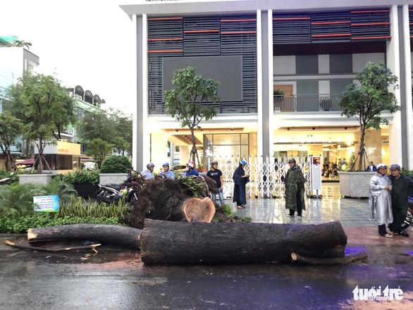 Nạn nhân vụ cây ngã trúng trên đường Nguyễn Tri Phương bị chấn thương nặng - Ảnh 1.