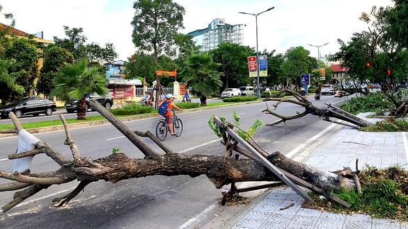 Bảo vệ cây xanh trước gió bão - Ảnh 4.