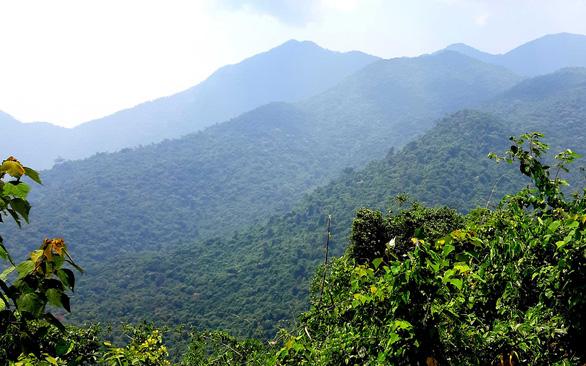 Trên đỉnh núi thiêng Bạch Mã - Kỳ 1: Rừng mưa nhiều nhất Việt Nam - Ảnh 4.