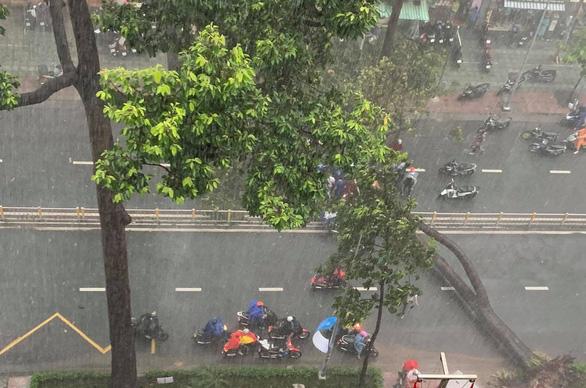 Người bị cây ngã đè trên đường Nguyễn Tri Phương đã qua đời - Ảnh 2.