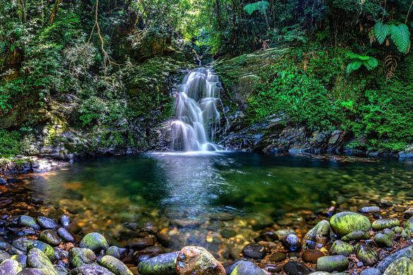 Trên đỉnh núi thiêng Bạch Mã - Kỳ 1: Rừng mưa nhiều nhất Việt Nam - Ảnh 5.