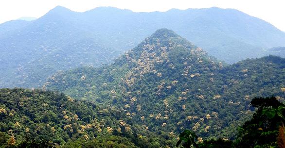 Trên đỉnh núi thiêng Bạch Mã - Kỳ 4: Lạc vào đại ngàn kỳ hoa dị thảo - Ảnh 2.