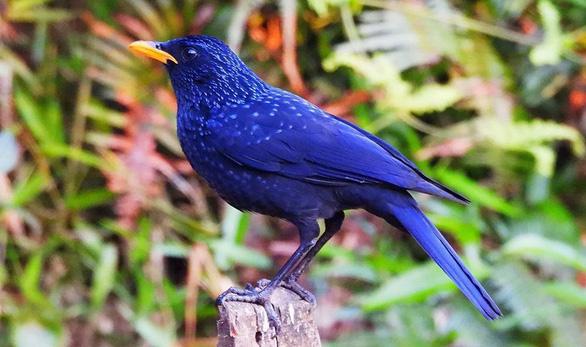 Trên đỉnh núi thiêng Bạch Mã - Kỳ 5: Rừng chim đặc biệt - Ảnh 1.