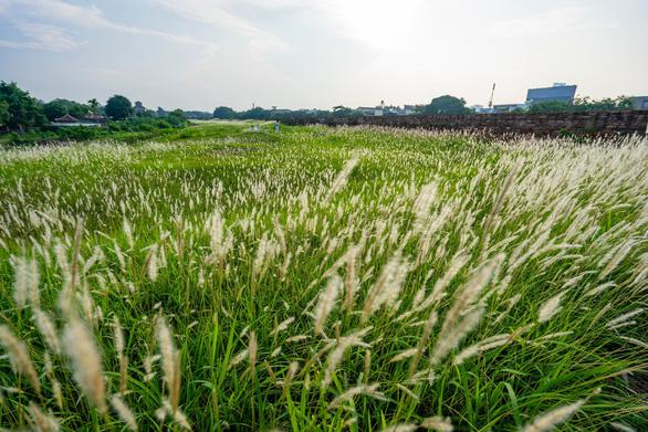 Lãng mạn mùa cỏ tranh xứ Huế - Ảnh 11.