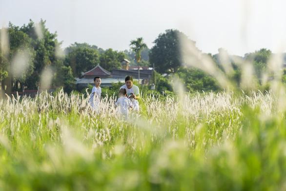 Lãng mạn mùa cỏ tranh xứ Huế - Ảnh 6.