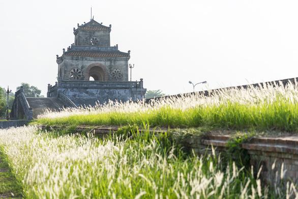 Lãng mạn mùa cỏ tranh xứ Huế - Ảnh 8.