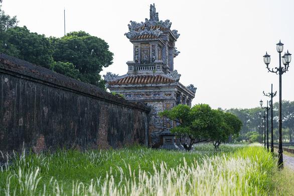 Lãng mạn mùa cỏ tranh xứ Huế - Ảnh 10.