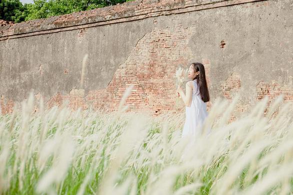 Lãng mạn mùa cỏ tranh xứ Huế - Ảnh 9.