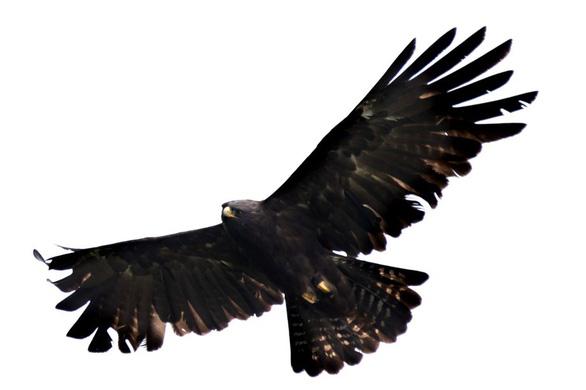 Trên đỉnh núi thiêng Bạch Mã - Kỳ 5: Rừng chim đặc biệt - Ảnh 7.