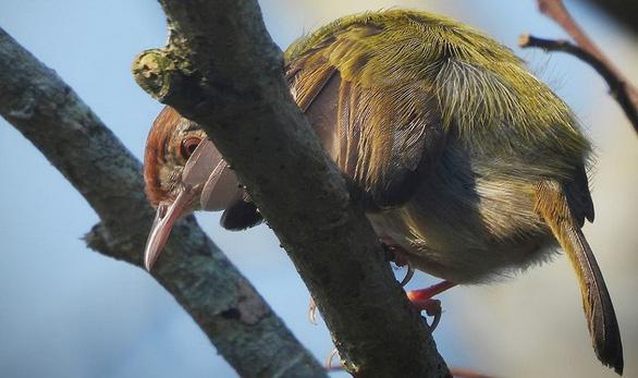 Trên đỉnh núi thiêng Bạch Mã - Kỳ 5: Rừng chim đặc biệt - Ảnh 8.