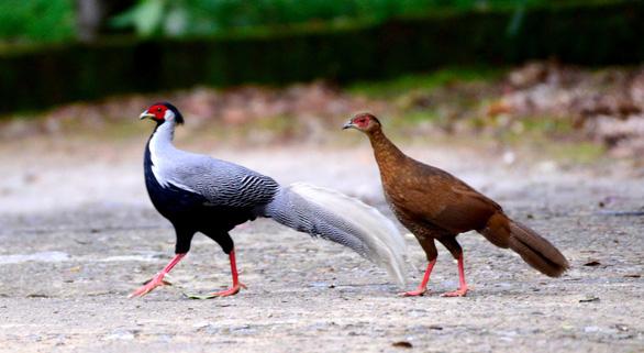 Trên đỉnh núi thiêng Bạch Mã - Kỳ 5: Rừng chim đặc biệt - Ảnh 6.