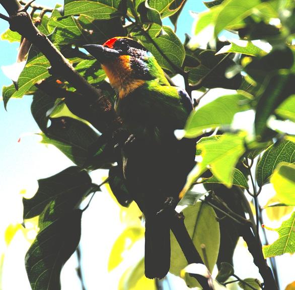 Trên đỉnh núi thiêng Bạch Mã - Kỳ 5: Rừng chim đặc biệt - Ảnh 2.