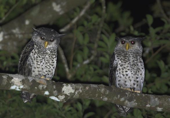 Trên đỉnh núi thiêng Bạch Mã - Kỳ 5: Rừng chim đặc biệt - Ảnh 3.
