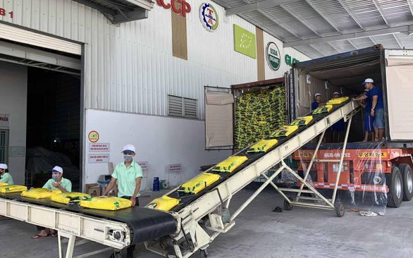 Nông sản Việt bắt đầu hưởng thuế ưu đãi vào châu Âu - Ảnh 1.