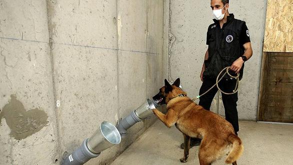 Dùng chó phát hiện người nhiễm COVID-19 rất hiệu quả - Ảnh 1.