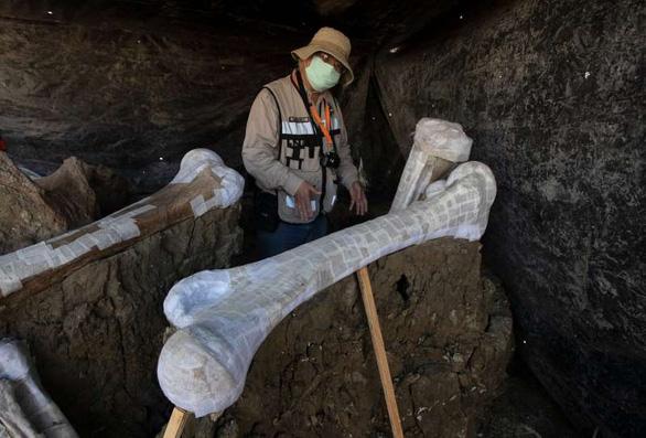 Tìm thấy hơn 200 bộ xương voi ma mút siêu khổng lồ gần nơi xây sân bay - Ảnh 1.