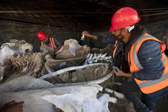 Tìm thấy hơn 200 bộ xương voi ma mút siêu khổng lồ gần nơi xây sân bay - Ảnh 4.